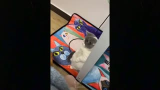 Cat cat fanny