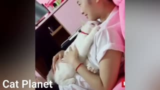 Funny Animals Compilation Cute Baby Cats