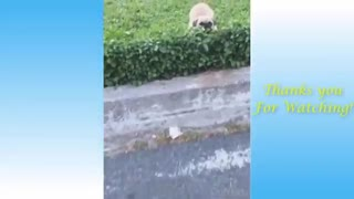 Funny moments of Cats and their Owners
