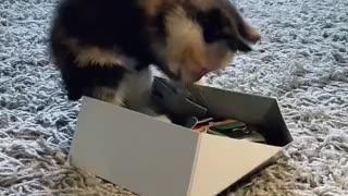 Litsa meets a puzzle box
