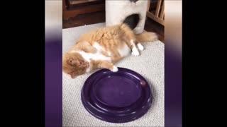 Laugh funny animal video