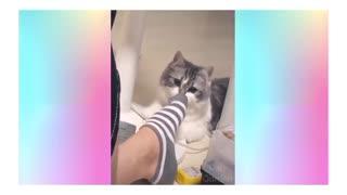 Cat cat cat 💜