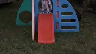 Happy Taffi on her slide