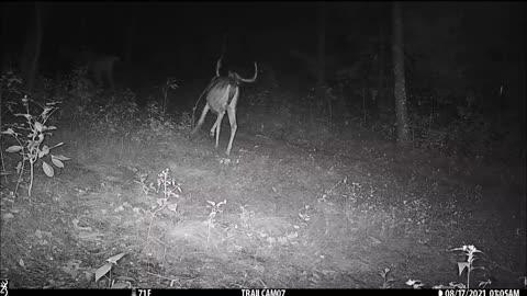 Wide 8pt buck meets heavy 10pt