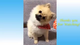 Cute Pets And Funny Animals Compilation Video 2021