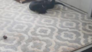 Kitties 4
