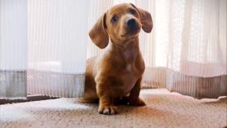 Cute puppy cute