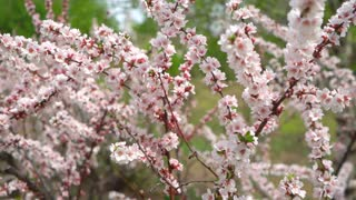 Spring roses-Beautiful-Flowers