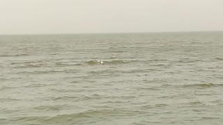 White Birds Swim On Qarun Lake Water Surface