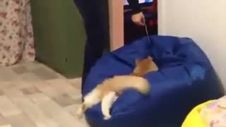 Jumping funny cat video