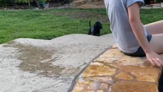 Pup Thought it Could Walk on Water