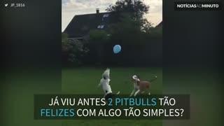 1 balão e 2 cães: felicidade garantida!