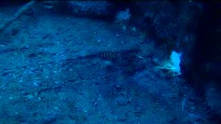 The Sea Tiger Wreck