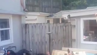 New Zealand Belly Flop