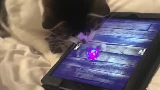 Black white cat playing rat game on ipad