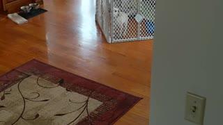 Adorable puppy escapes