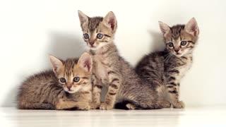 Kittens Against White Background 2