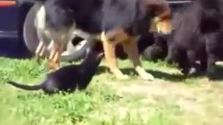 Police Dogs Break Up Cat Fight