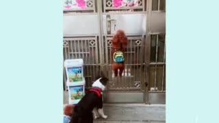 Dog opens a door