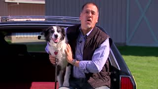 keeping your pets safe in the car tips