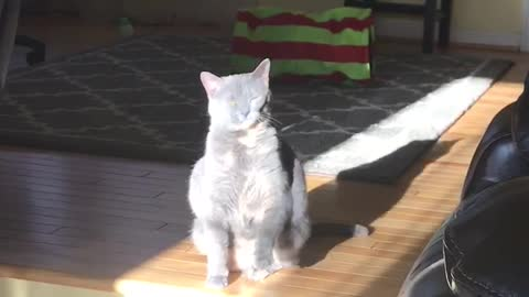 Funny cat literally tries to catch the sunshine