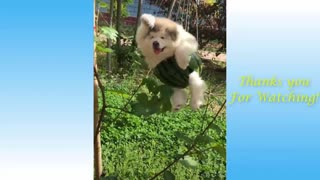 Funny Animal And Cute Pets