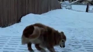 Dog happy expression
