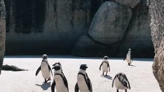 Wonderful Footage