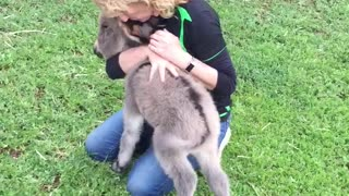 Baby Donkey Craves Cuddles