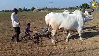 Indian Farmer Video ll India Video ll India Village Video ll #techonehit