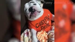 very funny dog videos