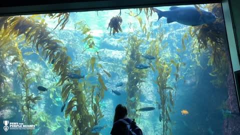 Service Dogs in Training Visit the Aquarium