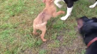 Dogs of My Friends Playing Together