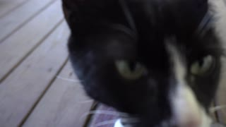 Cat looking for food