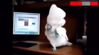 Cockatoo Dances To Heavy Metal