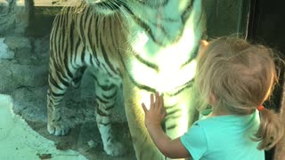 Little Girl Stares Down Tiger at the Zoo