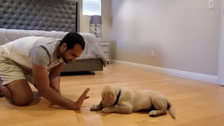 dog training commands all skills