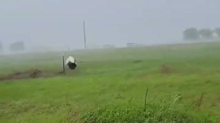 Dog House Tumble Along in Heavy Storm