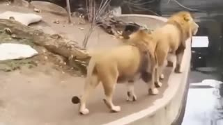 Funny Animal Video | Crazy Video