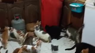 A woman raises 67 kittens in her home
