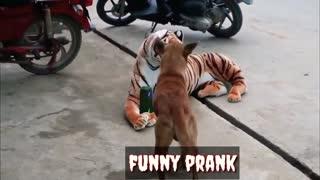 Funny animal prank video