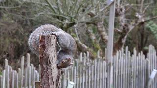 squirrel hides food inside broken tree