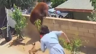 Woman bravely rescue her dog puppy from Brown BEAR