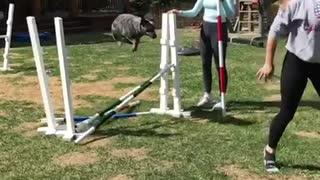 Girl grey jacket hops hurdles with black dog following behind