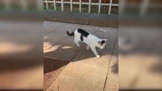 cats dogs fanny