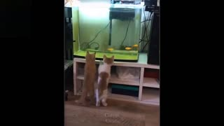 funny cute videos you cannot stop laughing try not to laugh.