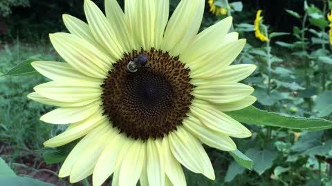 Bee Happy!!!
