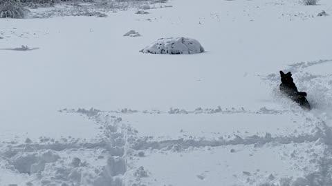 Dakoda in the snow!