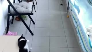 You won't believe what that cat did.