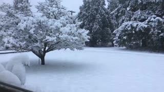 My winter wonderland 2020